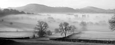 Mist (l4ts) Tags: trees mist landscape blackwhite derbyshire peakdistrict staffordshire drystonewalls darkpeak earlymorningmist hartington wettonhill dovevalley britnatparks narrowdalehill