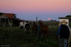 Luar da Madrugada (Daniel Marinho) Tags: cavalo tropa pantanal luar
