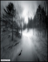 The Ski Run (DelioTO) Tags: wood winter snow canada landscape blackwhite quebec montreal trails pinhole 4x5 february f250 autaut ro9 shanghai100
