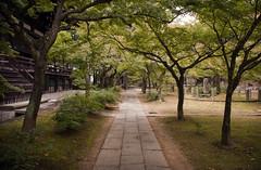 (WALK) Green Kyoto  3/5 (Alberto Sen (www.albertosen.es)) Tags: verde green japan nikon kyoto alberto kioto japon sen d300s albertorg albertosen