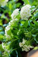 PhoTones Works #993 (TAKUMA KIMURA) Tags: plant flower nature small    kimura ep3 takuma    zd1260 photones