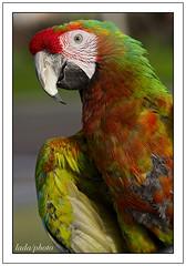 pretty bird..., pretty bird.