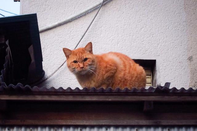 Today's Cat@2012-02-10