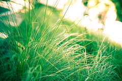 Summer Green (SkyWalker108) Tags: shadow macro green texture nature grass sunshine yellow closeup bokeh sydney australia 365 day109 skywalker project365 skywalker108