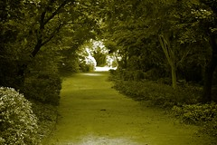 The long winding path (Deb Jones1) Tags: park travel trees green monochrome beauty canon garden botanical flora australia places vista flickrduel debjones1