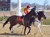 "2012-02-09 (20) r1 Abel Castellano Jr on #7 Chanterelle (JLeeFleenor) Tags: horses caballo cheval uma jr racing cal jockeys jockey abel jinete cavallo cavalo pferd equestrian kuda alogo equine hest thoroughbreds soos hevonen castellano cuddy paard cavall kon koin laurelpark 馬 jokey fantino häst ceffyl лошадь jóquei 马 koń faras hestur סוס perd người حصان konj кон άλογο घोड़ा capall beygir yarraman dżokej rennreiter жокей pfeerd marylandracing abelcastellanojr جُوكِي คนขี่ม้าแข่ง žokej kilparatsastaja jocheu ""경마 ""赛马骑师"" ""競馬騎手"" 기수"""