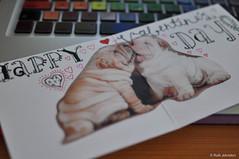 20120212-31.jpg (intoruth) Tags: february sharpei valentinesday valentinescard february2012