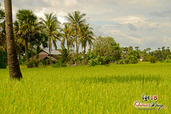 Rice Field- Kulen Mountain.jpg