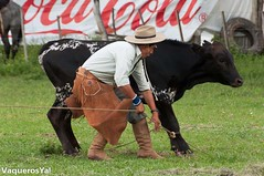 vaqueros_ya_fortin21 (VaquerosYa!) Tags: caballo toro vaca gaucho tradicin jineteada pialada