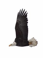 Bald Eagle In Flight (Alaska Magpie) Tags: nature birds alaska eagle wildlife flight baldeagle naturewildlifealaskaeaglesflowerslandscapessnowicewater