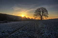 One Tree Hill (Daniel Borg) Tags: uk england sun cold tree birds sunrise unitedkingdom ground hdr canon24105mm canon450d coldandfrostymorning chesfield
