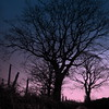 towards the dawn (perseverando) Tags: pink blue trees silhouette fence square dawn countryside tint diamondclassphotographer flickrdiamond perseverando visionqualitygroup magicunicornverybest magicunicornmasterpiece magicuncornverybest