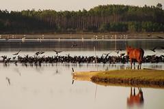 Lagoa do Peixe (Kitty & Kal-El) Tags: brazil brasil rs tavares lagoadopeixe