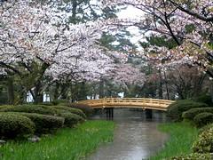 Kenrokuen (), Kanazawa (twiga_swala) Tags: tree japan garden season cherry japanese blossom  sakura six prefecture region kanazawa hanami kenrokuen ishikawa hokuriku     attributes  threegreatgardensofjapan  sanmeien
