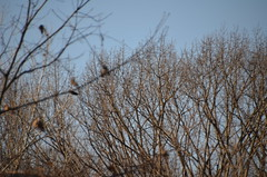 DSC_0100 (rlg) Tags: march sunday 11 2012 0311 fpr 201203 20120311 nikond5100 03112012