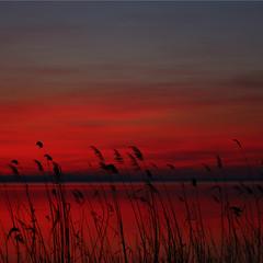 Per Sonia ()(flash)() Tags: colori compleanno auguri eris lagotrasimeno naturali tanti bestcapturesaoi soniacarlini elitegalleryaoi asquaresuperstarstemple