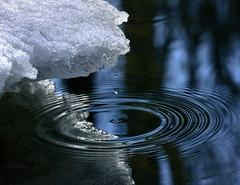 drip (marianna armata) Tags: distortion motion water reflections spring pattern drip rings thaw mariannaarmata