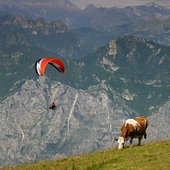 Life is lived on the edge at Monte Baldo (Bn) Tags: camera blue summer sky italy panorama mountain lake holiday mountains alps smile car cheese trekking garden walking polaroid cow milk italian garda rocks europe strada mediterranean italia photographer lift view cows hiking path altitude flight cable ridge liftoff primo edge panoramica tandem paragliding elevated peaks paraglider milka viewpoint fiore higher topf100 walkers mont thermal climate breathtaking malcesine cowbell paragliders gardameer baldo dairycow 100faves panview 2218m