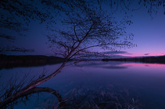 Exit light - Enter night (Explored) (Tore Thiis Fjeld) Tags: longexposure lake color reflection tree oslo norway night forest nikon branches horizon surface le nd afterglow d800 maridalen 14mm samyang maridalsvannet
