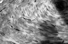 第一次拍,第一卷。柯达400TX、美能达XD-11 鹰眼58f1.2 (时光旅行摄影) Tags: 旅行 f12 保定 时光 胶片 柯达400tx 时光旅行摄影工作室 时光旅行摄影 鹰眼58 美能达xd11