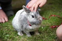 DSC_1033 (divi333) Tags: rabbit bunny bunnies ferrara rabbits conigli coniglio 2016 conigliando