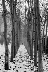 Linear on the Snow (martacalado) Tags: china trees winter people snow walk linear cangzhou