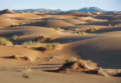 Waves of Sand (Don Csar) Tags: africa mountains sahara yellow sand desert arena amarillo morocco maroc desierto marruecos dunas montaas merzouga ergchebbi marrok