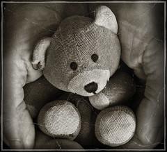Bentely (marianna armata) Tags: bear old cute texture toy stuffed hands antique small cuddly worn hmm bentley macromondays mariannaarmata