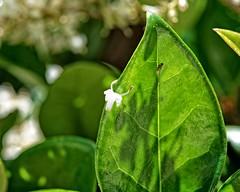 Floral Attack (DASEye) Tags: flowers flower floral fly nikon attack challenge week21 davidadamson daseye 52in2016 52in2016challenge