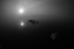 trail of a silent comet (Mindaugas Buivydas) Tags: morning winter bw mist cold fog mystery river dark frost december mood moody gloomy darkness delta minimal fisheye minimalism transition lithuania lietuva nemunas nemunasdelta sadnature
