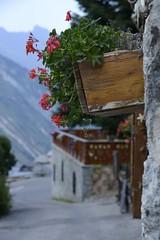 graniums (thierrysuchet1) Tags: fleurs savoie lesmenuires graniums saintmartindebelleville