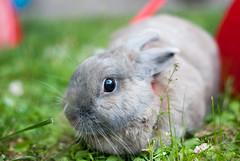 DSC_0083 1 (divi333) Tags: rabbit bunny ferrara coniglio 2016 conigliando