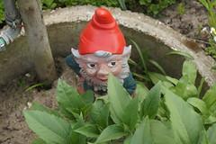 Gunther ist erwacht aus dem Winterschlaf (ebien) Tags: garden spring allotment garten frhling kleingarten schrebergarten frhblher frhlingsblume gardenplot