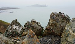 Irish Ivy And Rock (trailrunner55) Tags: travel ireland howth plant rock wall island ivy mortar stonewall rockwall irishsea ivyonrock