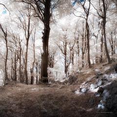 Sunday on Klek - part II (elkarrde) Tags: autumn trees sun mountain tree grass digital forest woods pentax sunday croatia sunny infrared 1855 klek 2011 720nm da1855 k100d justpentax pentaxk100dsuper k100ds pentaxart smcpentaxda1855mm13556 autumn2011 tianyair720