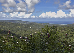 View, Barbados
