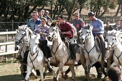 Vendargues, 10me rencontre des Gardians (kat's here) Tags: horse caballos cadoule gardians bandide lacadoule vendcadou