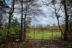 looking in on Spring (Mr. Greenjeans) Tags: trees field rural fence landscape spring louisiana gate pasture roadside canonefs1022mmf3545usm 17mm mrgreenjeans gaylon bakerla gaylonkeeling mchughrd