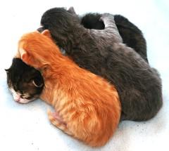 I nostri primi otto giorni. (virgiliomulas.) Tags: vita griffis gatta gattini femminucce maschietti catnipaddicts virgiliocompany vg~catsgallery inostriprimiottogiorni