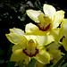 Orquídeas (II)