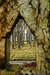_DSC2299 (s.penman) Tags: trees castle woodland lewis ground isles stornoway