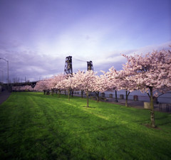 we now return you to your usual spring (manyfires) Tags: pink green film oregon square portland spring cityscape blossom pinhole bloom pacificnorthwest sakura pdx steelbridge pnw zero2000 cherrytrees zeroimage