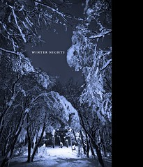 Winter Nights (Ptur Gunn Photograpphy) Tags: blue trees winter sky snow beautiful zeiss stars frozen iceland woods frost branch angle sony magic extreme wide down full frame nights alpha magical reykjavk sland 850 ptur 1635 gunnarsson kpavogur skgur mr puring sjnarhorn vtt