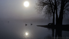On a cold Morning  -  expl..1 (alpenbild.de) Tags: morning sun lake reflection tree water contrast bayern bavaria see swan wasser sonne kontrast schwan reflexion morgen spiegelung contrasts baum prien morgens kontraste 150fav