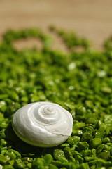 A la orilla del mar/At the seashore (En medio del camino) Tags: madrid macro verde caracola piedras cursointermedio