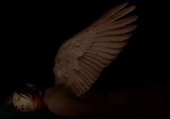 dead (V. Santiago) Tags: shadow selfportrait art me angel photoshop dead wings