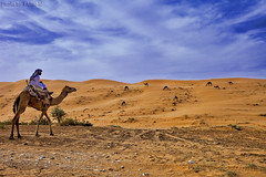 Patron of camels HDR (TARIQ-M) Tags: sky cloud texture sahara landscape sand waves pattern desert shepherd ripple patterns dunes wave camel ripples camels riyadh saudiarabia hdr patron       canoneos5d herdsman     goldensand              canonef1635mmf28liiusm  canoneos5dmarkii    tariqm tariqalmutlaq