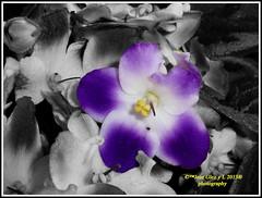 Blue flowers Cutout (Pepe (ADM)) Tags: flowers blue flores nature cutout flor fiori fleure