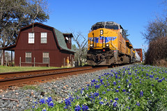Sign of spring (Moffat Road) Tags: railroad columbus up train texas tx unionpacific ge bluebonnets springtime freighttrain coloradoriverbridge barnhouse gevo texasstateflower es44ac sunsetroute megew