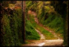 Efecto Orton. Perales del Puerto. (P e p a) Tags: verde primavera colores caminos extremadura perales efectoorton